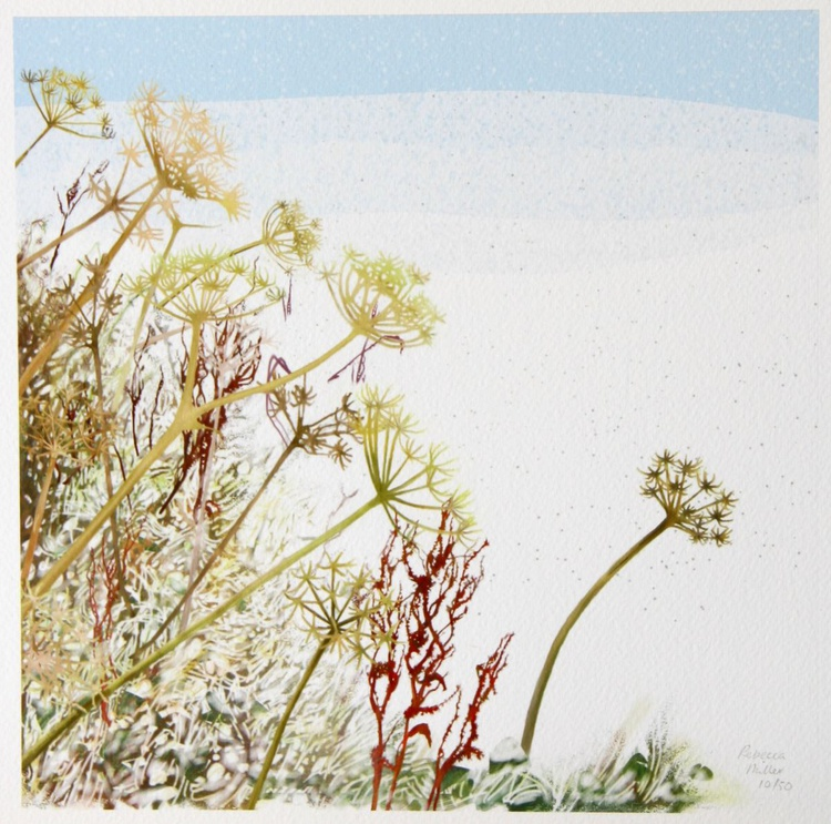 Winter Cow Parsley - Image 0