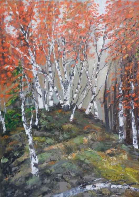 Birches at the edge of the forest -