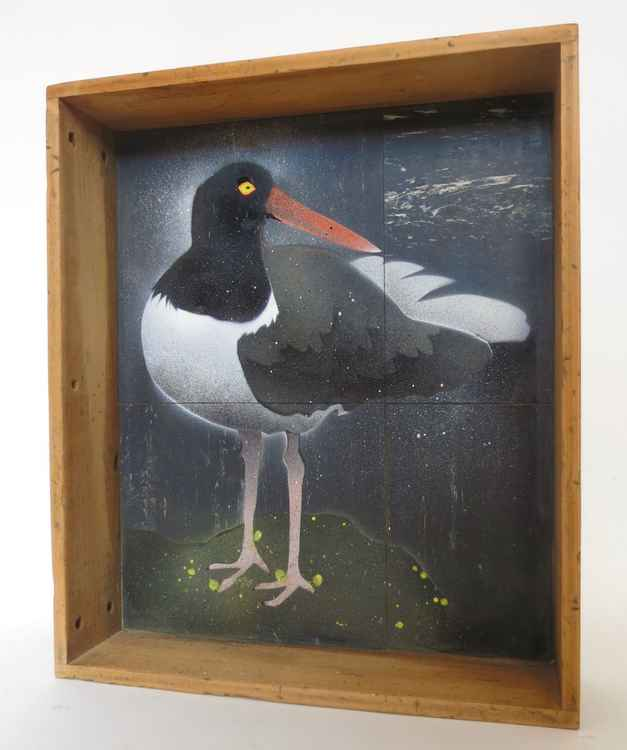 Oyster Catcher in Drawer