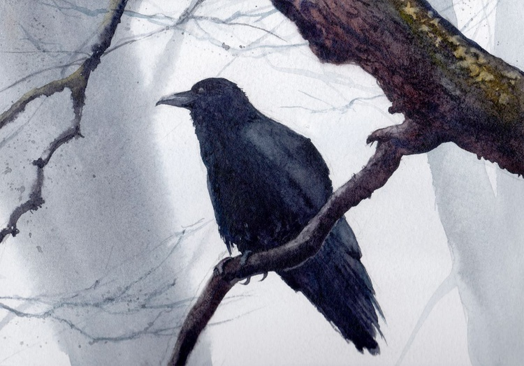 Crow on the Branch - Image 0