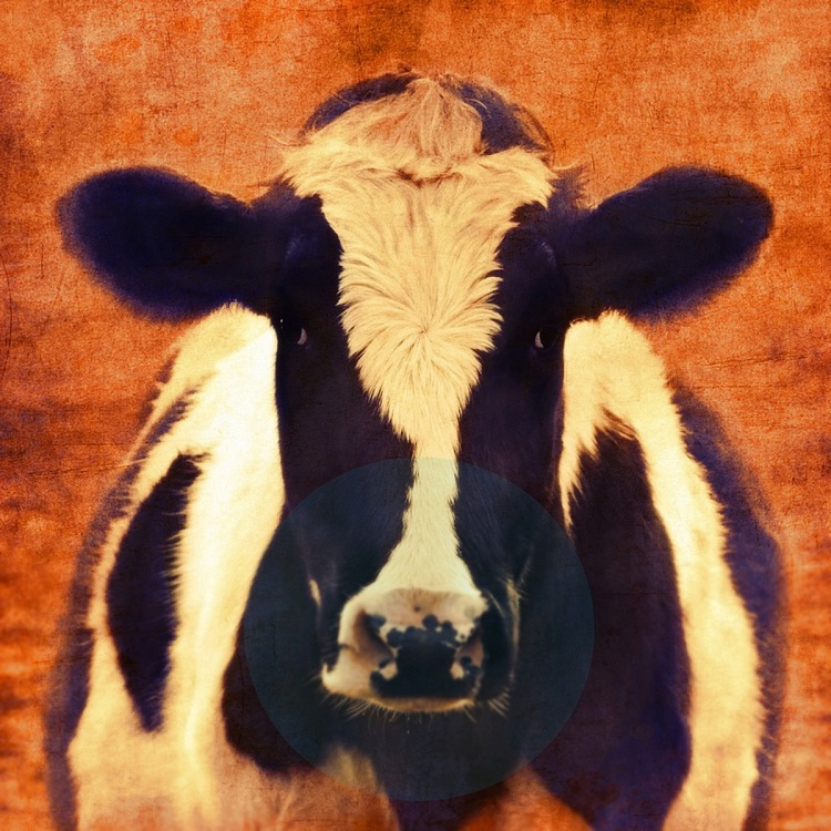 Holy Cow Cinema - Image 0