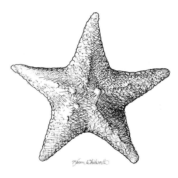 Starfish Nautical Black and White Sealife Drawing - Image 0