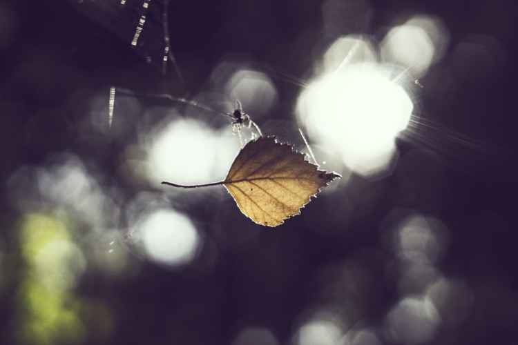 Spider and The Leaf -