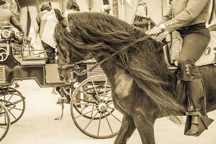 Black Stallion. - Image 0