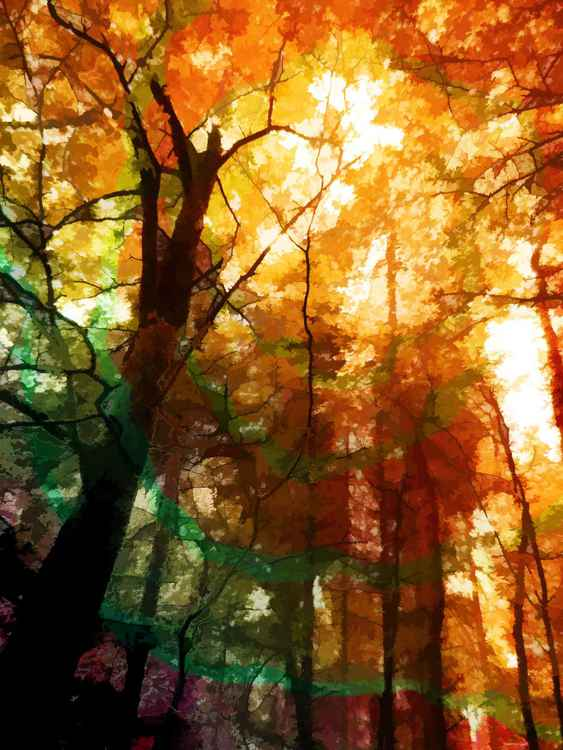 Autumn Glory -