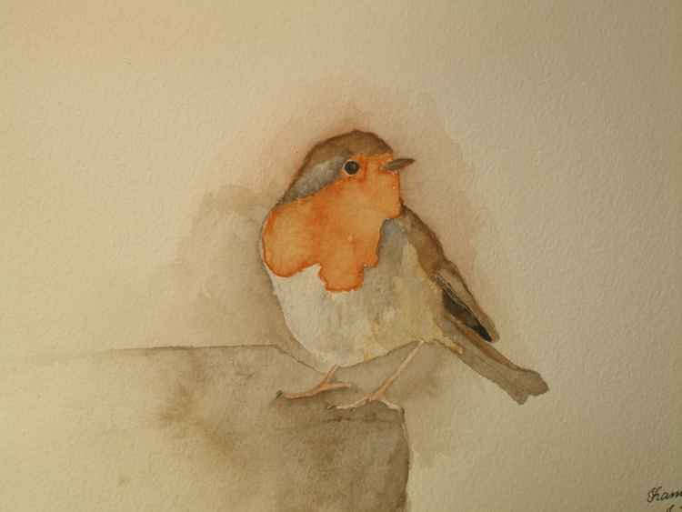European Robin Bird -