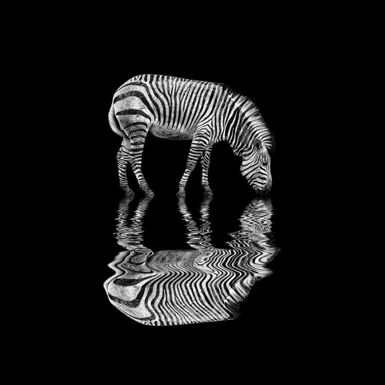 Stripe To Stripe - Image 0