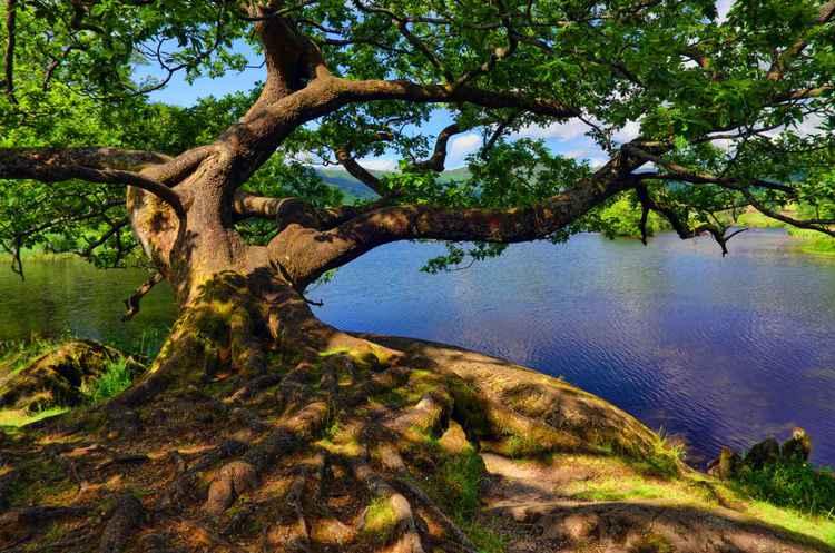 Rydal Water, Cumbria, England