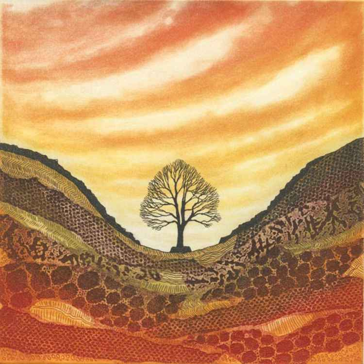 Sunset Sycamore Gap -