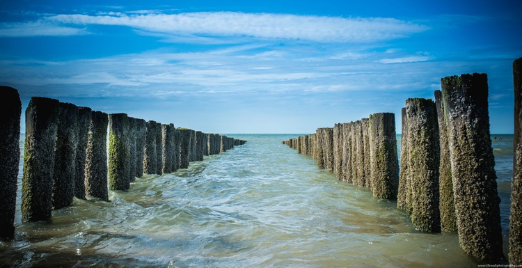 Sea and summer - Image 0
