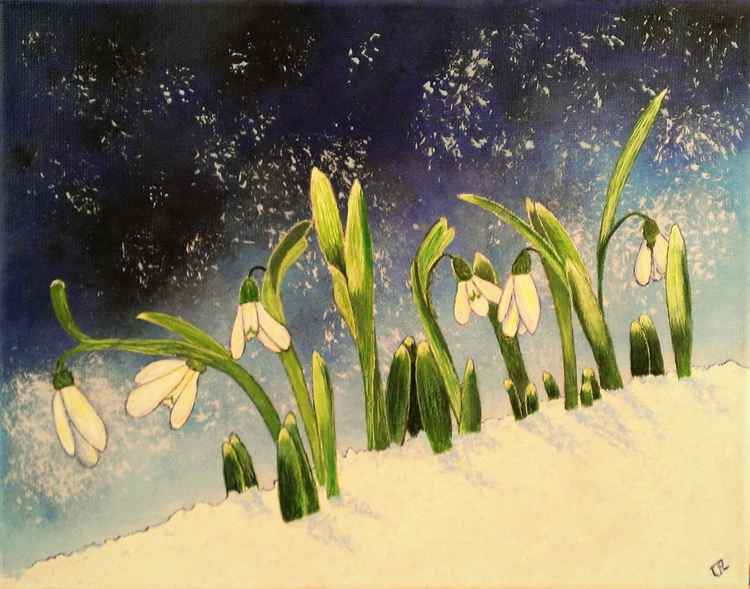Snowdrop Miracles -