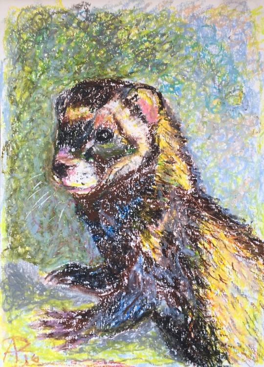 Ferret - Image 0