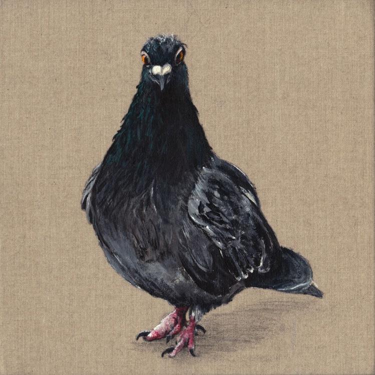 Pigeon 0011 - Image 0