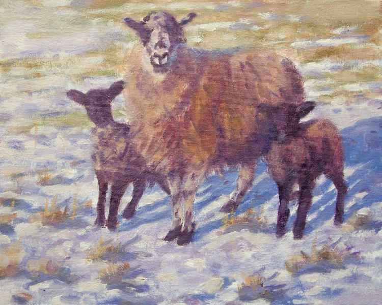 Welsh Sheep and lambs -