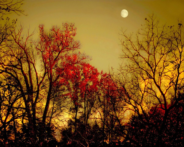Autumn Moon - Image 0