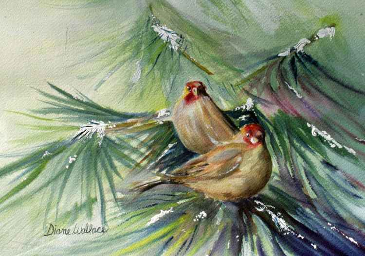 Winter Finches -