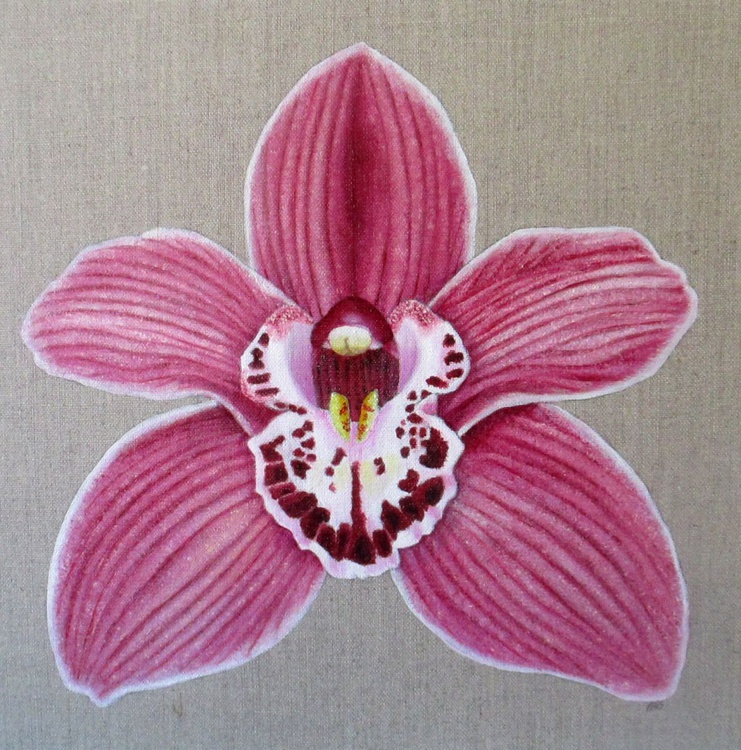 Orchid Summer Geyser Candy - Image 0