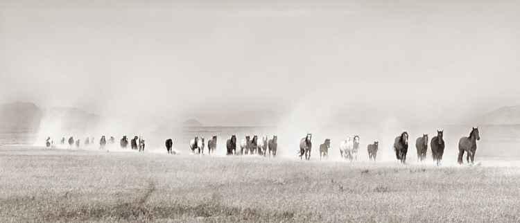 Onaqui Wild Horse Herd -