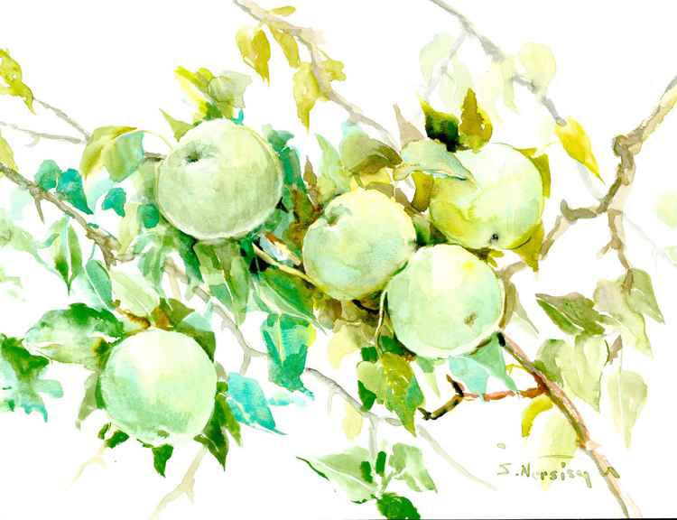 Green Apples on the Tree -