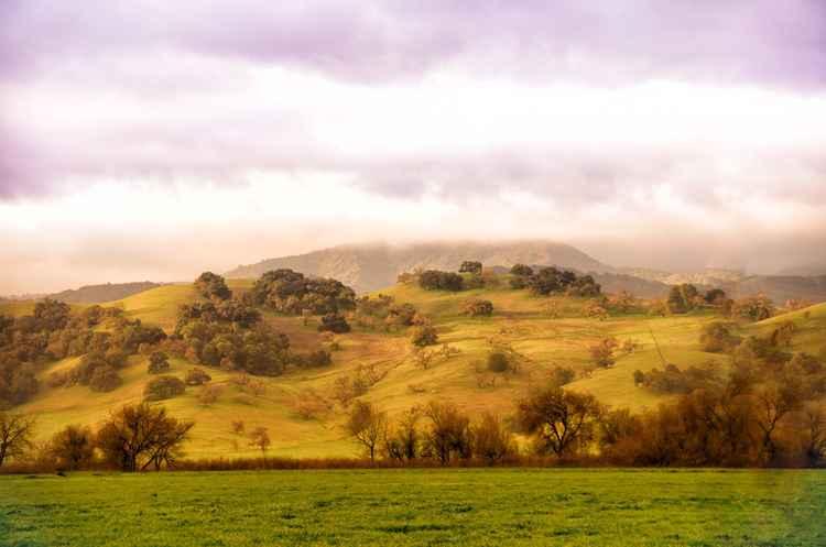 Fog Over the Golden Hills -