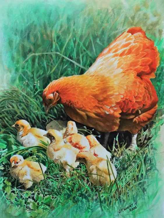 Chicken and chicks