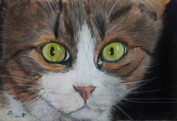 Scaredy Cat, cat pastel postcard art
