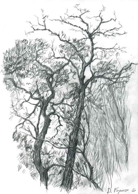 Autumn Acacia -