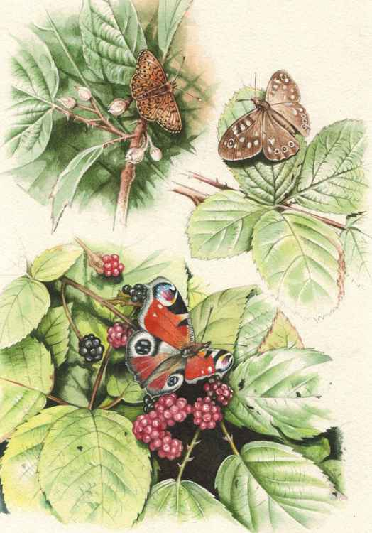 British butterflies -