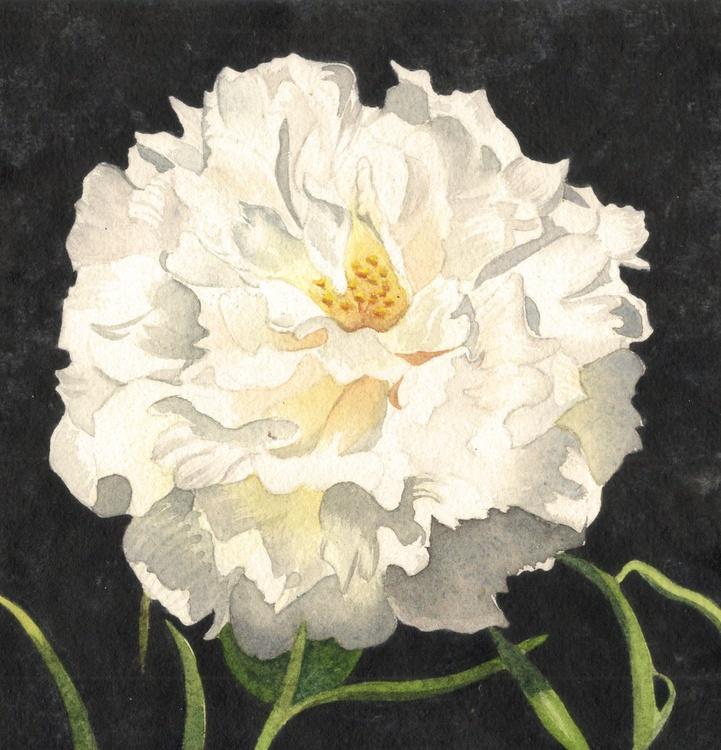 Moss Rose Flower - Image 0