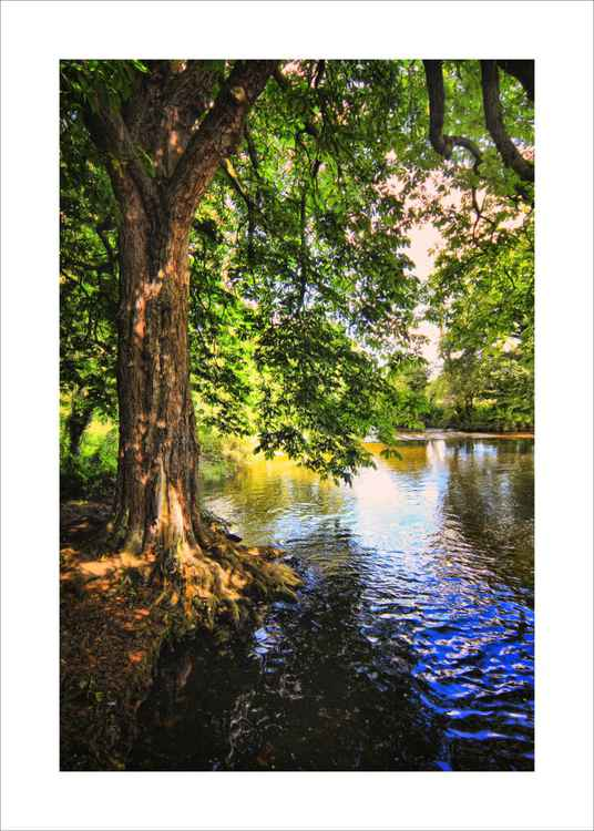 River and Tree -