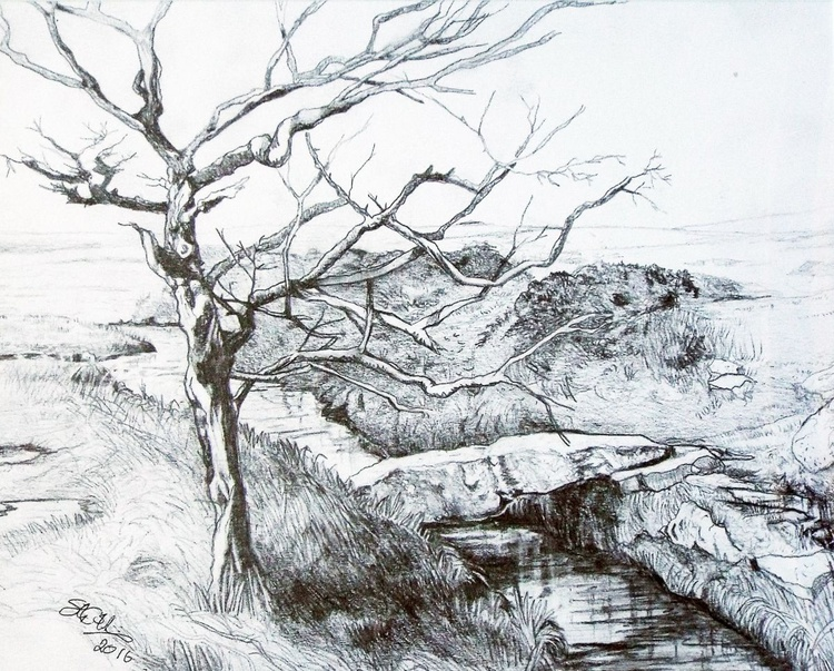 Wind blasted tree, Wallabrook Clapper Bridge, Dartmoor - Image 0