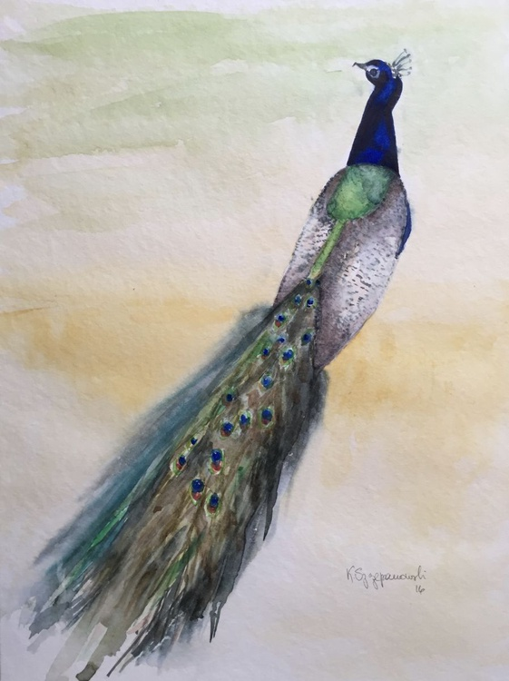 First Peacock - Image 0
