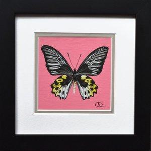 Specimen 006 - Rippon's Birdwing (Troides hypolitus) by Alexa Aulds