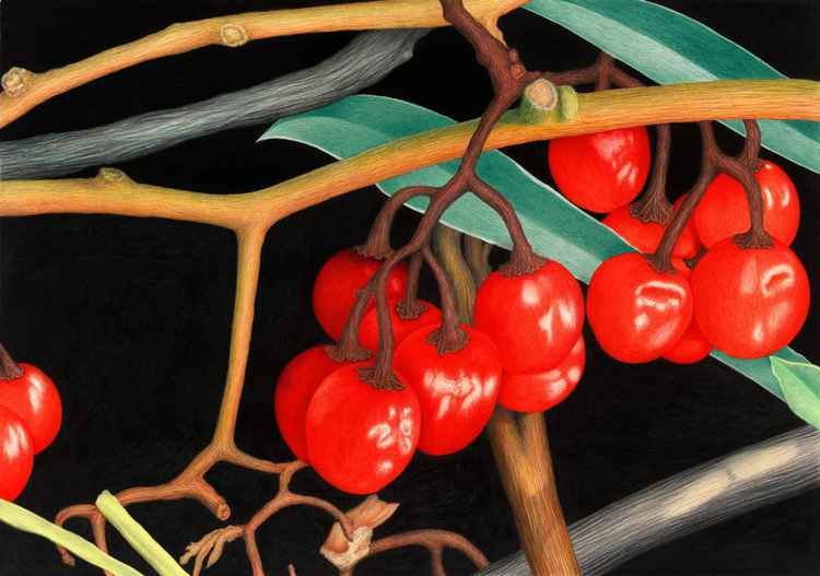 Autumn Berries -