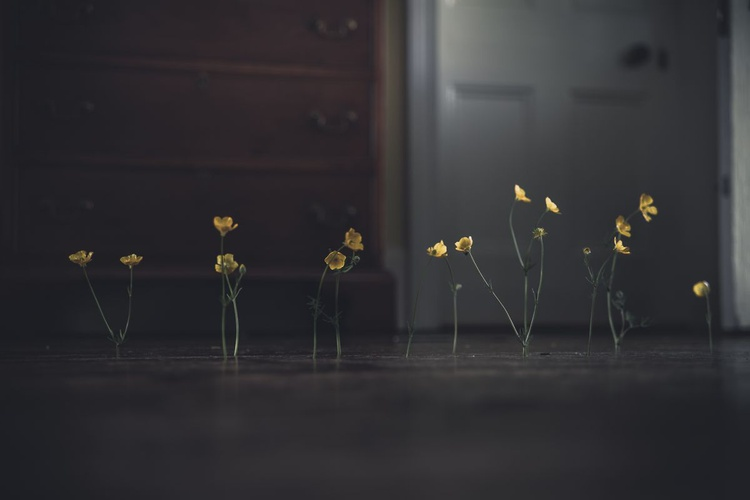 Flowers and Floorboards No.1 - Image 0