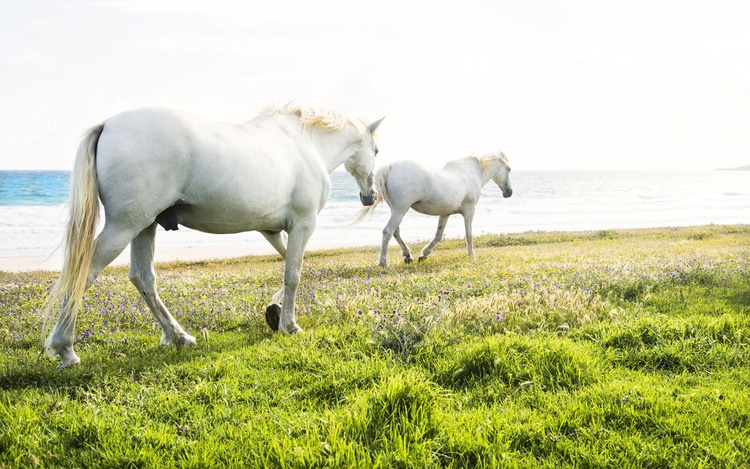 BEACH HORSES 4 - Image 0