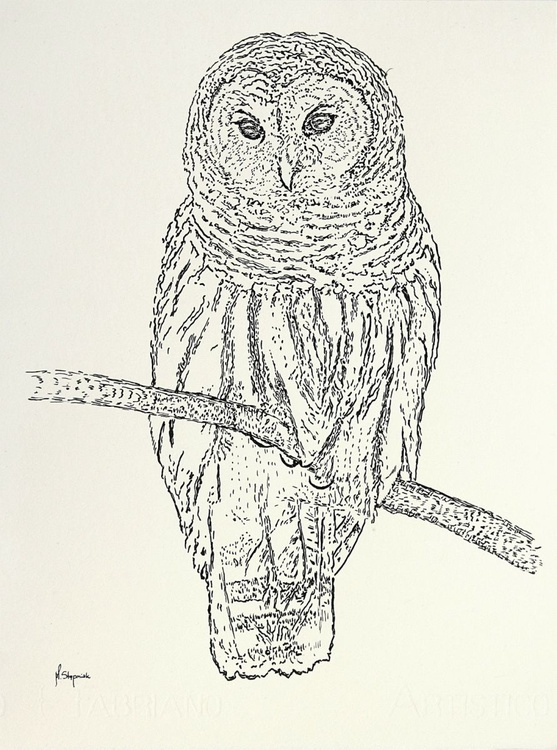 The Ural owl (Strix uralensis) - Image 0