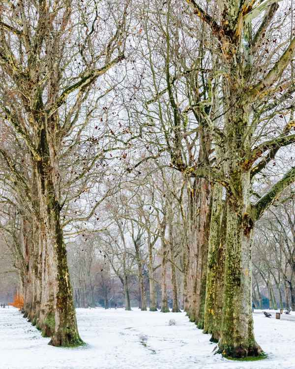 Lancaster Walk in the Snow -
