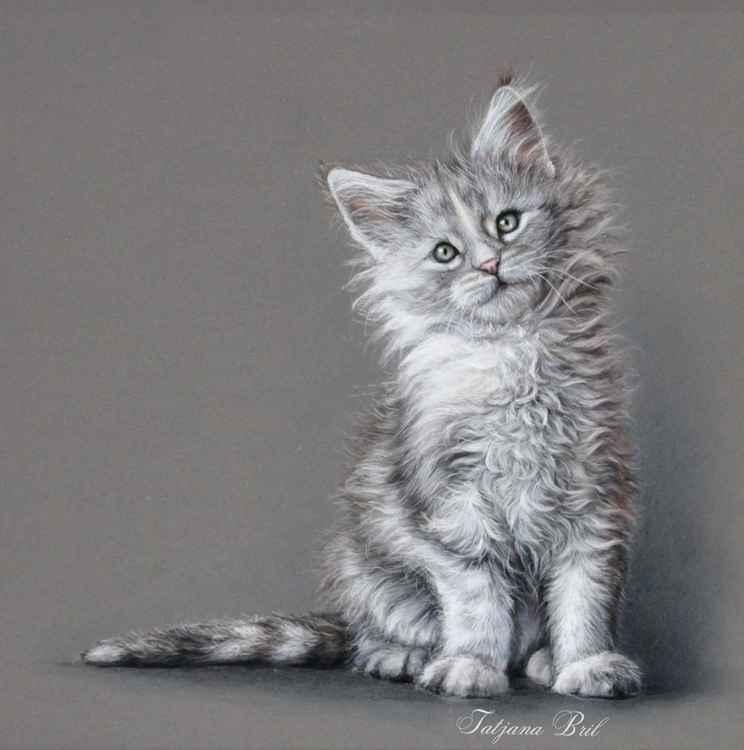 White Kitten -