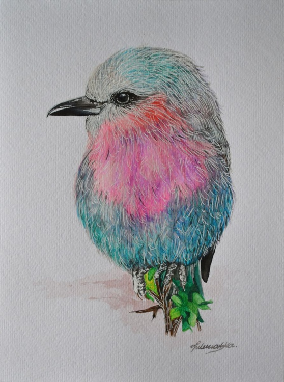 Lilac breasted roller - Image 0