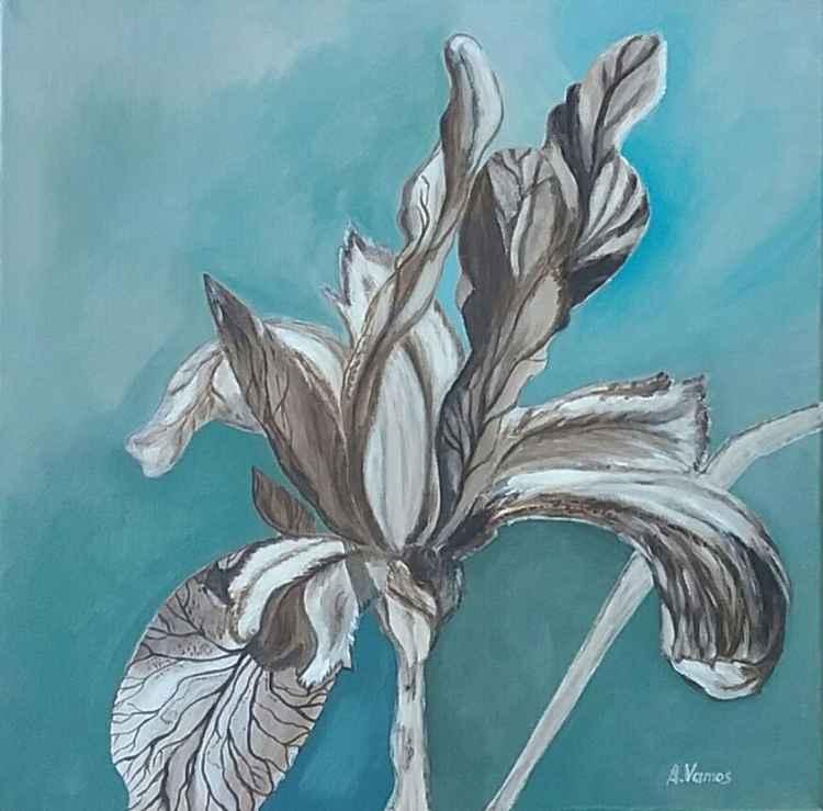 Burnt Iris -