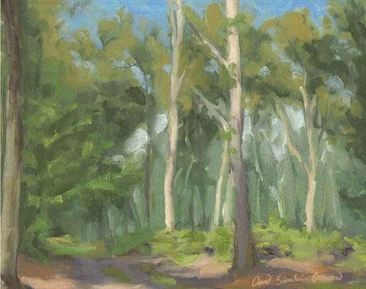 Forêt près d'Ury/Forest near Ury -