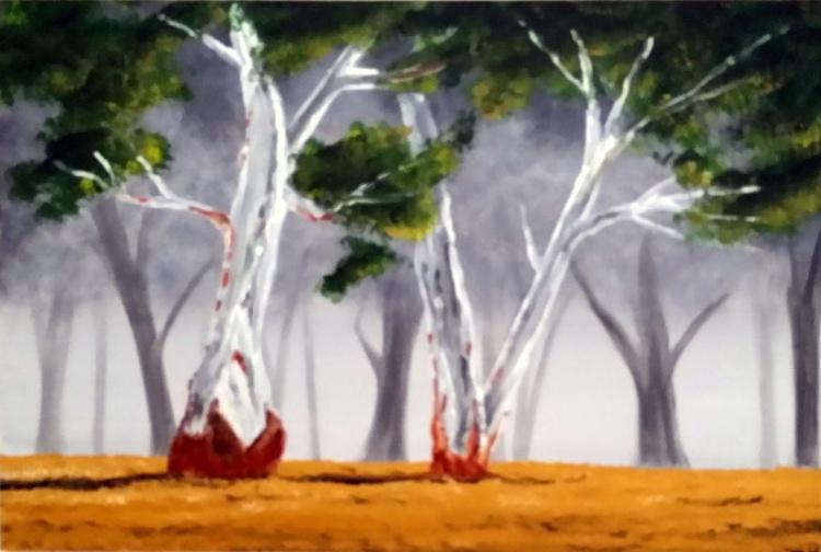 Eucalyptus Tree - Image 0