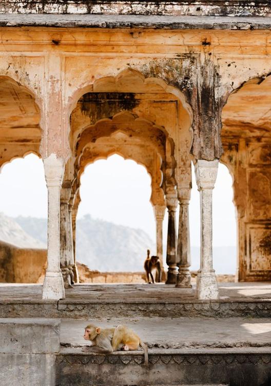Monkeys in Temple Ruin, Jaipur (84x119cm) - Image 0