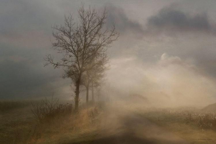 Shrouded in Fog - Image 0