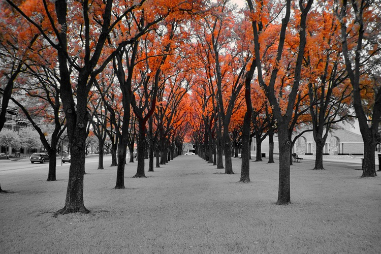 Red Trees   [#201504242] - Image 0