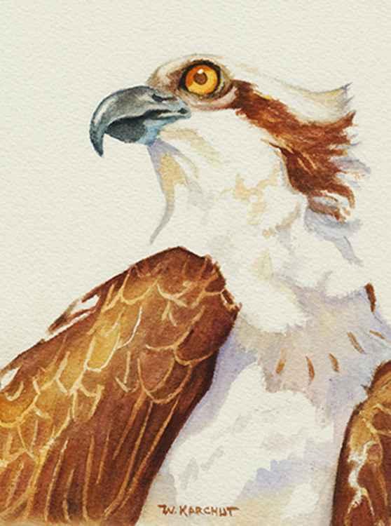 Osprey -