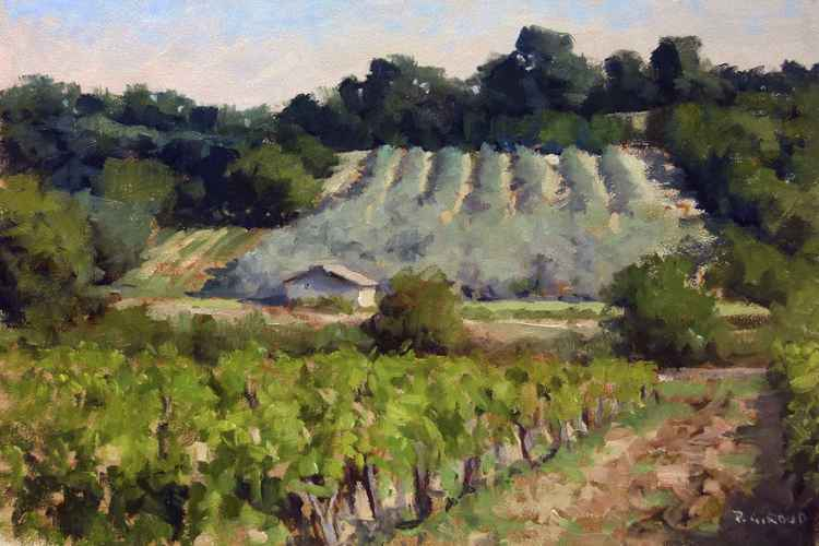 Vineyards and Olive Fields -