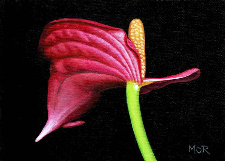 Anthurium_two