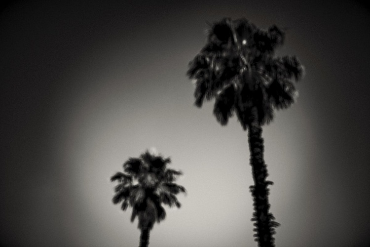 """""""Why are palm trees so damn happy?"""" - Image 0"""